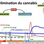 Courbe cannabis